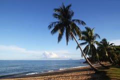 Die Ansicht über den Sandstrand mit Palmen und blauem Meer Stockbild