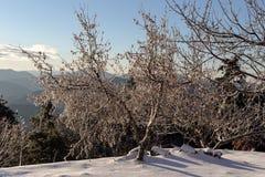 Die Ansicht der Berge im Abstand und in den Eis-bedeckten Bäumen Stockfotografie