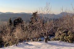 Die Ansicht der Berge im Abstand und in den Eis-bedeckten Bäumen Stockfotos