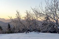 Die Ansicht der Berge im Abstand und in den Eis-bedeckten Bäumen Lizenzfreie Stockbilder