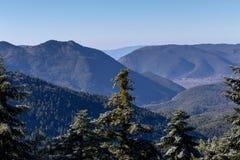 Die Ansicht der Berge im Abstand und in der Eis-bedeckten Fichte Stockbild