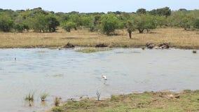 Die Ansicht der Flora und der Fauna in Nationalpark Yala, Sri Lanka stock footage