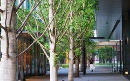 Die Ansicht der grünen Allee in der Stadt Lizenzfreie Stockfotografie