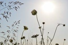 Die Ansicht der Sonne und senkt auf ein Feld stockfotografie