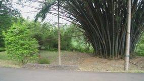 Die Ansicht des botanischen Gartens in Kandy stock footage