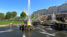 Die Ansicht des Brunnen ` Samson-`, sonnig Maifeiertag Peterhof, St Petersburg stock video footage