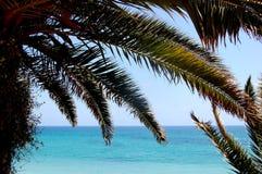 Die Ansicht durch die Palmen lizenzfreie stockbilder