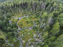 Die Ansicht von den Höhen in den Nebenflüssen und im Sumpf in der Waldvogelperspektive Stockbilder