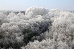 Die Ansicht zum Wald mit weichem Raureif stockfotografie