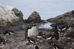 Die Antarktis - Pinguine Stockfoto