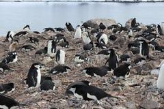 Die Antarktis - Pinguine Lizenzfreie Stockfotos