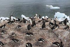Die Antarktis - Pinguine Lizenzfreies Stockfoto