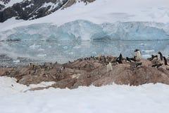 Die Antarktis - Pinguine Stockbild
