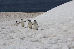 Die Antarktis - Pinguine Stockfotografie