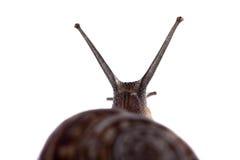 Die Antennen der Schnecke stockbilder