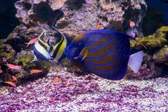 Die Aquariumeinwohner der Unterwasserwelt Stockfotografie