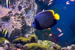 Die Aquariumeinwohner der Unterwasserwelt Stockbild