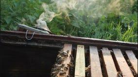 Die Arbeit des Imkers mit Bienen stock footage