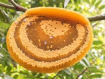 Die Arbeitsbienen auf der Bienenwabe Stockbilder