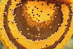 Die Arbeitsbienen auf der Bienenwabe Lizenzfreie Stockfotos