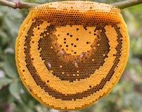 Die Arbeitsbienen auf der Bienenwabe Lizenzfreies Stockfoto