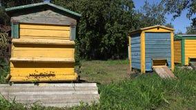 Die Arbeitskraftbienen, die zu den bunten Bienenstockhäusern im Sommerfrucht-Apfelbaum fliegen, arbeiten im Garten 4K stock video