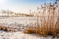 Niederländische ländliche Landschaft im Winter Lizenzfreies Stockfoto