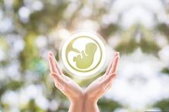 Die Armstützembryounterstützung zu schwangerem Lizenzfreies Stockfoto