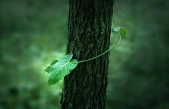 Die asiatische Grünpflanze  Lizenzfreies Stockfoto