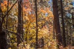 Die atemberaubende Schönheit und die Ruhe von Sedona Arizona stockfoto