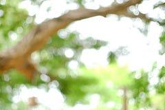Die Atmosphäre des Baums Stockfotografie