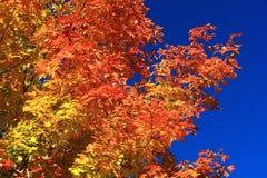 Die auffallenden Farben des Herbstes. Lizenzfreie Stockfotografie