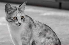 Die aufmerksame Katze Lizenzfreie Stockfotos