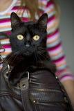 Die Aufmerksamkeit der schwarzen Katze Stockfotos