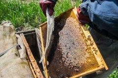 Die Aufnahme des Honigs auf eine alte Art Lizenzfreie Stockfotos