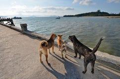 Die aufpassenden Hunde auf der Brücke Stockbild