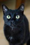 Die Augen des Haustieres Stockfotos