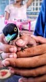 die Augen eines Vogels Lizenzfreies Stockfoto