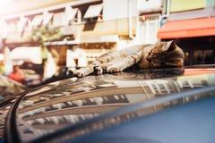 Die ausgedehnte heraus Katze, die auf die Oberseite eines Autos liegt, parkte auf der Straße Reflexion auf den Fenstern des Lacks Stockfotografie