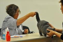 Die Ausstellung von Katzen Stockfotos