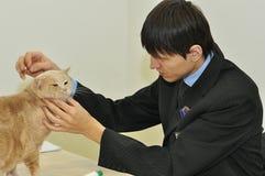 Die Ausstellung von Katzen Stockfotografie