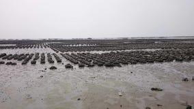 Die Austernbauernhöfe, Thailand stock video footage