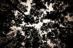 Die Bäume Stockfoto