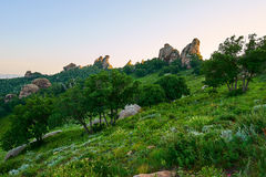 Die Bäume auf dem Alpenwiesesonnenuntergang Stockfotografie