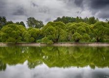 Die Bäume auf der Bank Stockbild