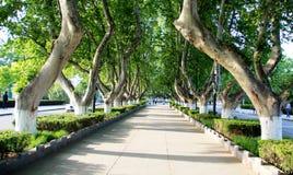 Die Bäume, die auf der Straße stehen Lizenzfreie Stockfotos