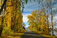 Die Bäume, die im gelben Herbst gekleidet wurden und die Orangenblätter zeichneten die Straße in Canterbury Stockbilder