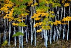 Die Bäume durch den Wald Lizenzfreies Stockfoto