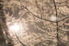 Die Bäume im Schnee lizenzfreie stockfotos