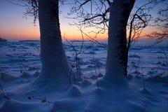 Die Bäume im schneebedeckten Strand lizenzfreie stockfotos